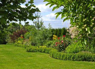 Jak stworzyć formowany ogród we francuskim stylu?